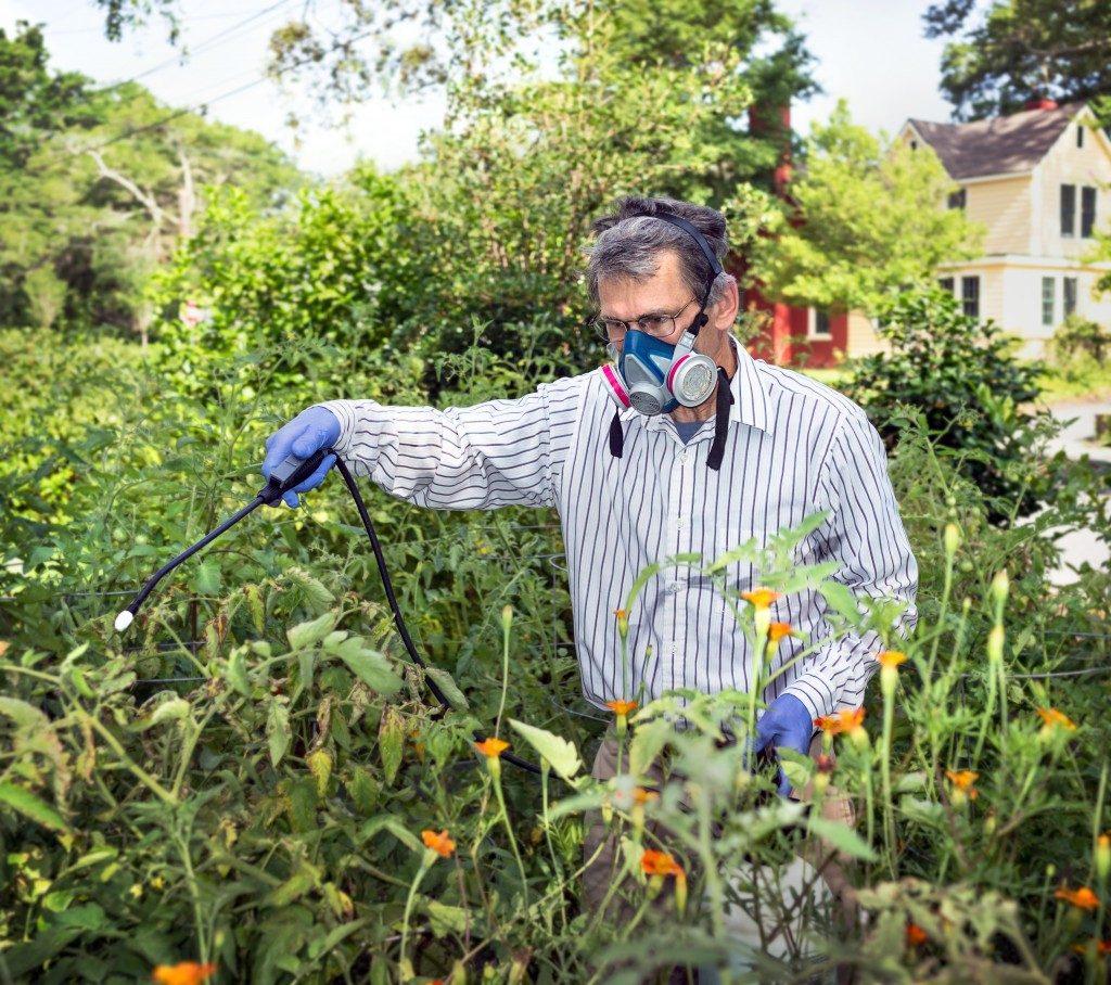 man spraying grass wearing a respirator