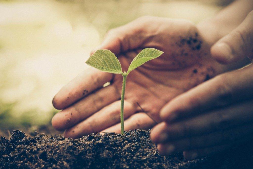 Person nurturing a plant