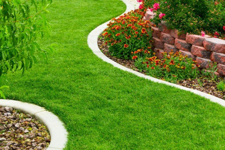 garden grass and flowers